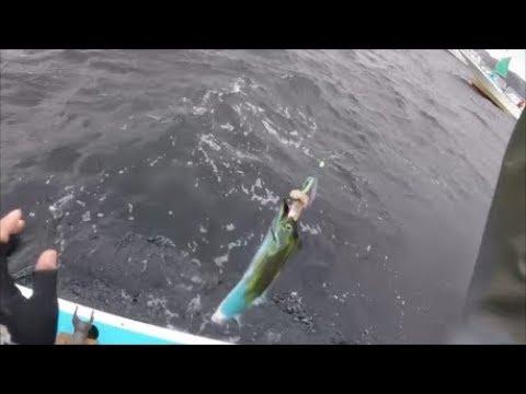 Fishing in Tokyo! Beltfish (Tachiuo)
