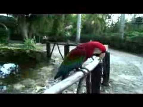 macaw---what-did-it-say???
