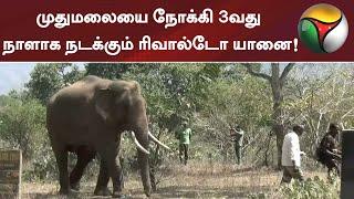 முதுமலையை நோக்கி 3வது நாளாக நடக்கும் ரிவால்டோ யானை! | Elephant