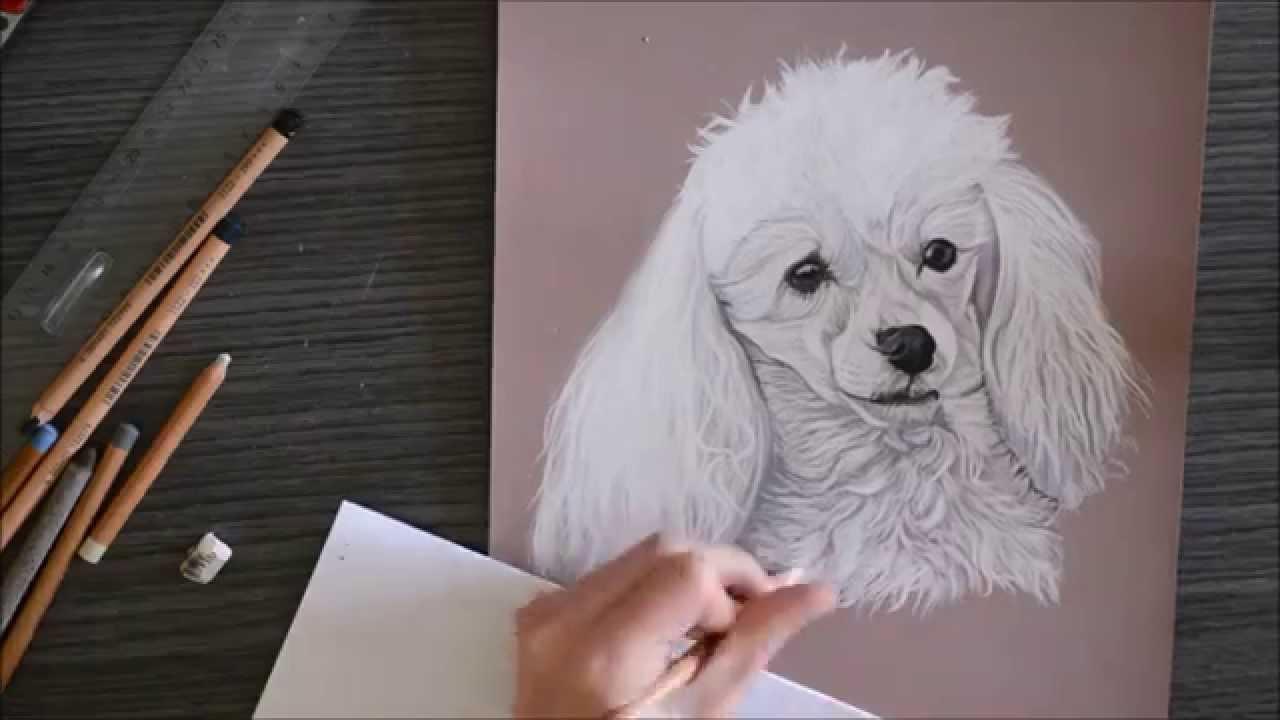 Speed drawing caniche youtube - Dessin caniche ...