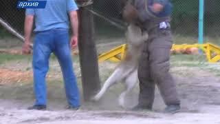 Дмитрий Медведев утвердил список опасных пород собак