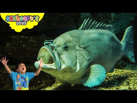 Toddler excited to see the BIG FISHES and sharks at Ocean Park Hong Kong - Skyheart's Toys