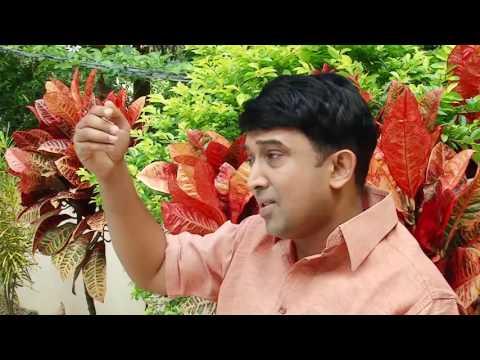 Vikara Naukayumai thumbnail