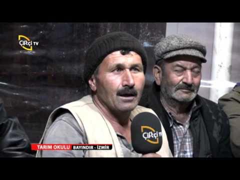 TARIM OKULU/İZMİR- BAYINDIR/ŞEKER OTU