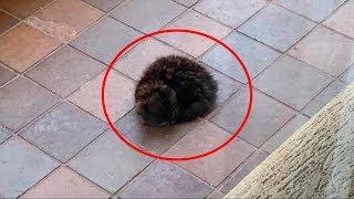 Открыв дверь, женщина увидела худенького котёнка. Он неподвижно лежал, свернувшись калачиком