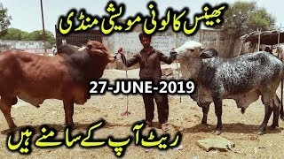 Bakra Mandi Bheins Colony karachi tedi Bakri Goats searching by ijaz
