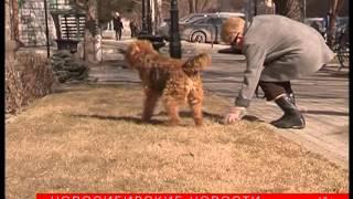 Как выгулять собаку и не нарушить закон в Новосибирске