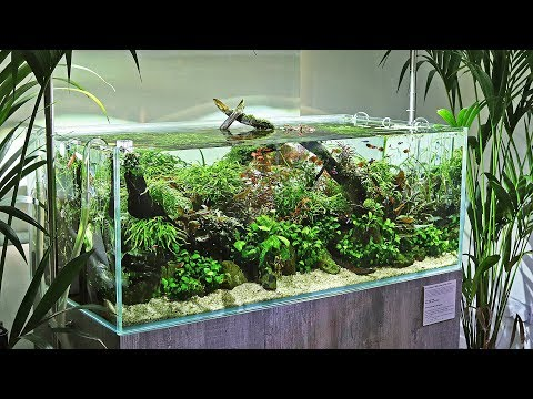 scaped-nature---a-unique-and-beautiful-aquascaping-store---full-tour
