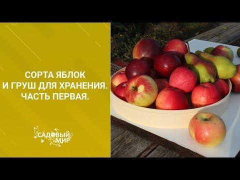 Сорта яблок и груш для хранения. Часть первая