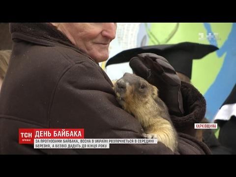 Харківський бабак Тимко навіщував українцям ранню весну