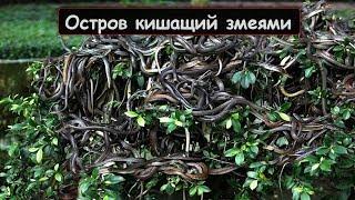 Остров змей и другие самые страшные острова на планете!