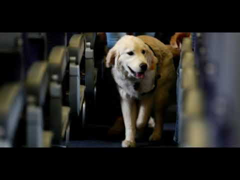 Service Dogs Will Be Allowed On Planes, Not Emotional Support Pets