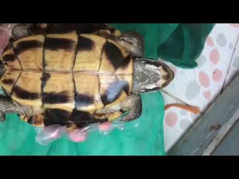 Bán rùa phóng sinh ở Hà Nội
