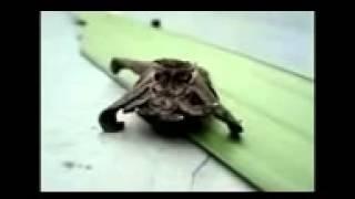 Alien  real strange animal russia Thumbnail
