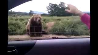 Baixar - When Giant Bear Say Good Bye To You Grátis