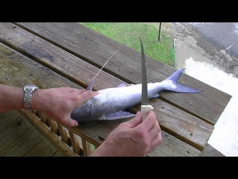 Redneck 101 - How To Fillet Gafftop Catfish Quickly Without Skinning