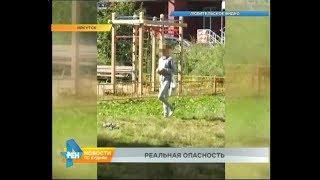 Яд разбрасывают на улицах Иркутска. Под угрозой не только собаки, но и дети