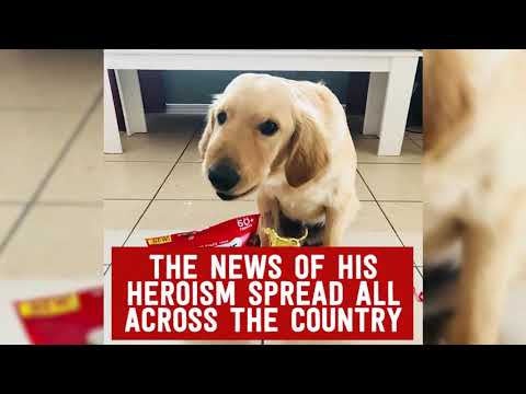 Teri Ann - Meet Todd The Hero Dog That Saved His Human!