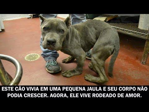 Este cão vivia em uma pequena jaula e seu corpo não podia crescer  Agora, ele vive rodeado de amor