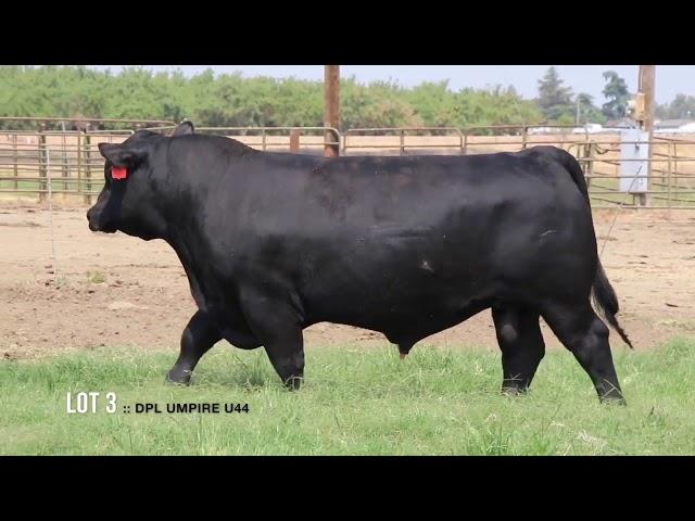 Dal Porto Livestock and Rancho Casino Lot  3