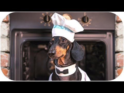 Dog – Master Chef! Funny animal video!