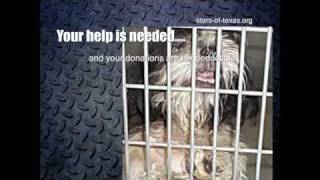 Stars Of Texas Shih Tzu Rescue - What Is Rescue?