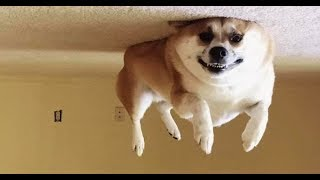 Funny Dogs Moments 2019