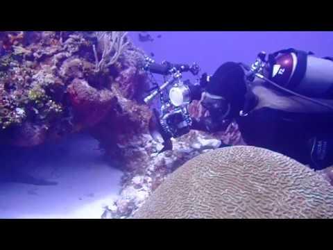 Ocean Nomads - Underwater Photography Internship