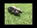 Zoo Animal Attacks When Dangerous Animals Don't Know What Glass Is! [Funny Pets]