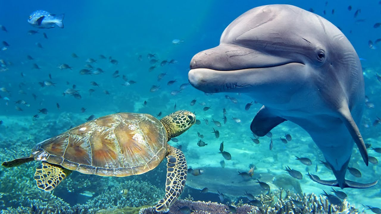 Relaxing Music for Stress Relief. Dolphin singing. Soothing Music for Meditation, Therapy, Sleep