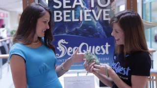 take a behind the scenes look at layton hills mall s new seaquest interactive aquarium