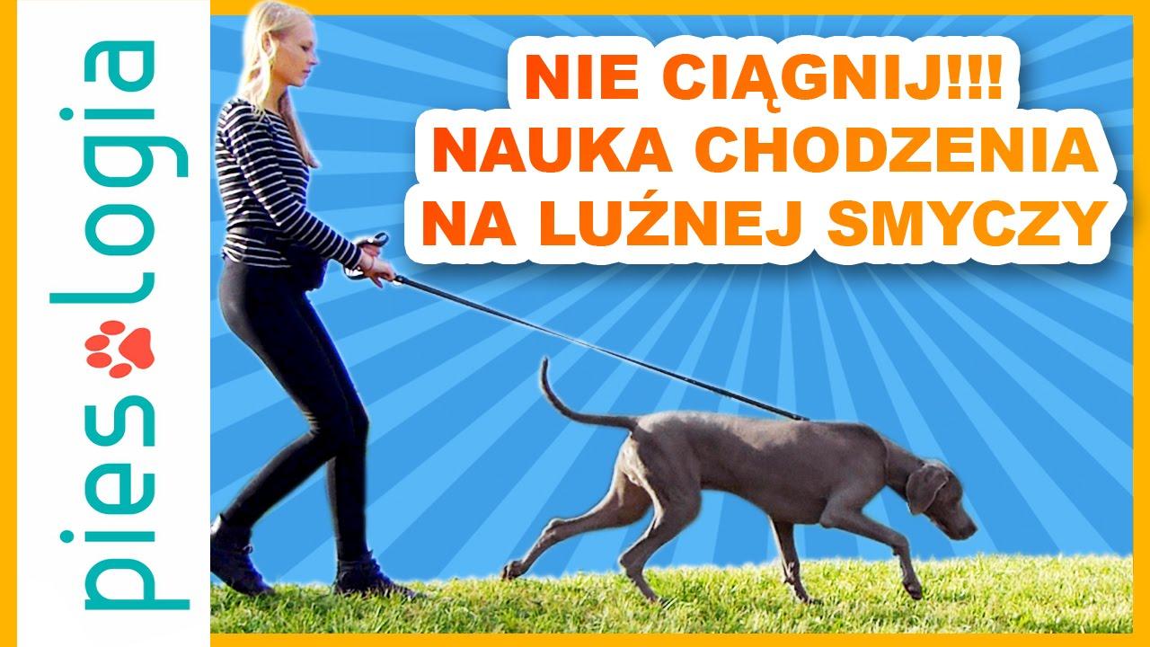 Jak szkolić psy - nauka chodzenia na luźnej smyczy
