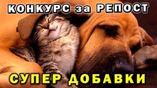 Добавки для собак и кошек ♕ Розыгрыш ❤ Вконтакте за репост 🎤 Зоохвост