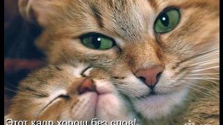 Смешные картинки про кошек и котят Выпуск №70  FUNNY CATS СМЕШНЫЕ КОШКИ