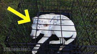 Pareja encuentra un cachorro abandonado en un parque con el mensaje más triste escrito en su cuerpo.