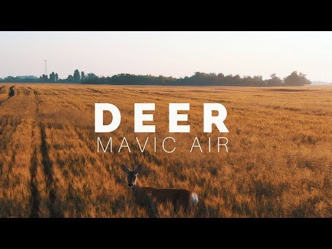 DJI Mavic Air Test | Deer at Dawn