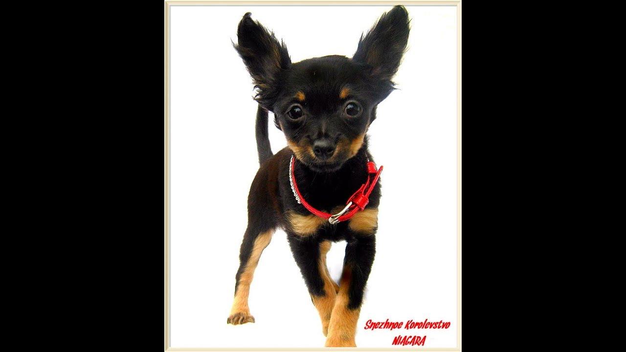 Транспортировка. Клетки, загоны, боксы. Одежда и обувь · зимние куртки, комбинезоны · обувь для собак · trixie · шапки для собак · свитера для собак · велюр, трикотаж · трусы для течки, пояса для кобелей · комбинезоны украинских производителей · носочки для собак · костюмы, платья, брюки для собак.