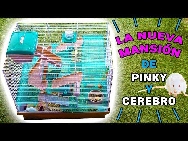 NUEVA MANSIÓN RATITAS DE LABORATORIO PINKY Y CEREBRO | El Gallinero de Mike