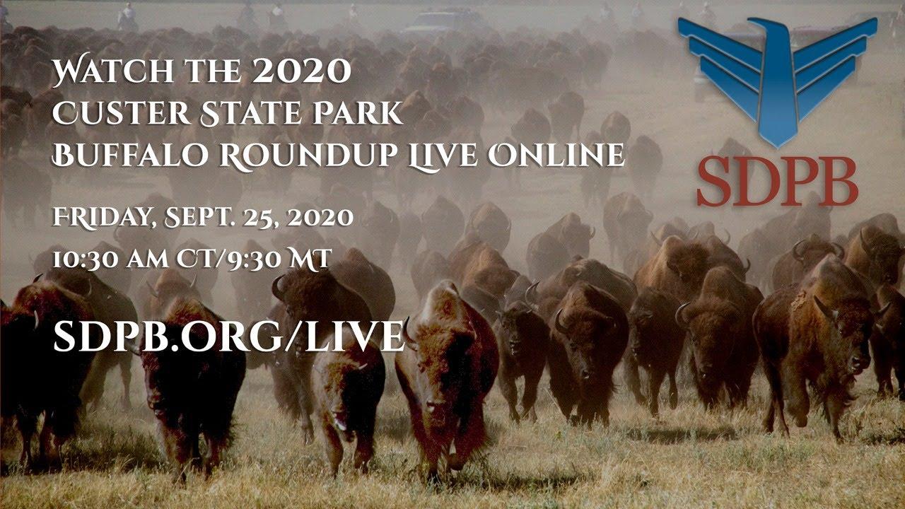 Custer State Park Buffalo Roundup Arts Festival Black Hills Badlands South Dakota