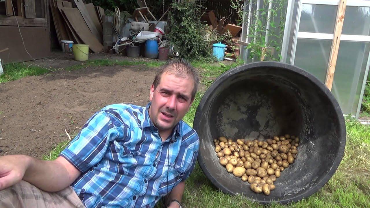 Kartoffelernte Artikelbild