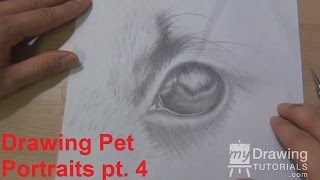 Drawing Pet Portraits Part 4 – Adding Texture to the Fur