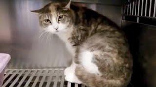 Беременная кошка дрожала от страха прячась в углу клетки