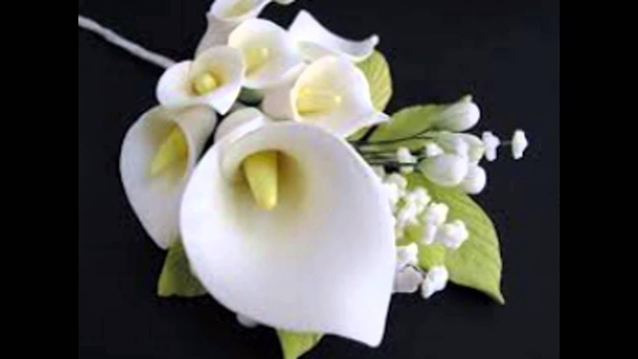Beautiful Calla Lily Flower In The World Youtube