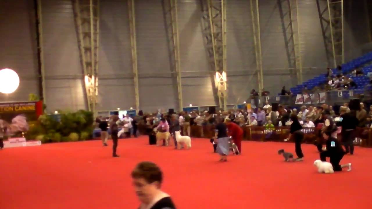 Expo canine Douai 2010(2) - YouTube