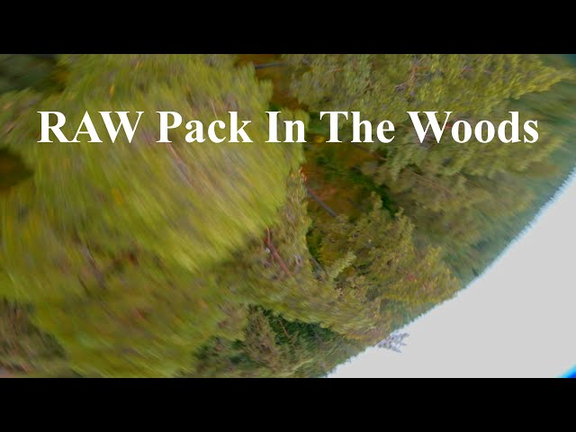 RAW Flight At Random Forest Spot | Fpv Freestyle