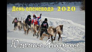 День оленевода 2020.Южная Якутия.Самый главный оленевод.