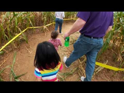 Mini Corn Maze - Running running
