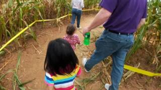 Mini Corn Maze - Running Running