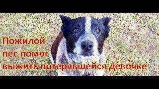 Пожилой пес помог выжить потерявшейся девочке