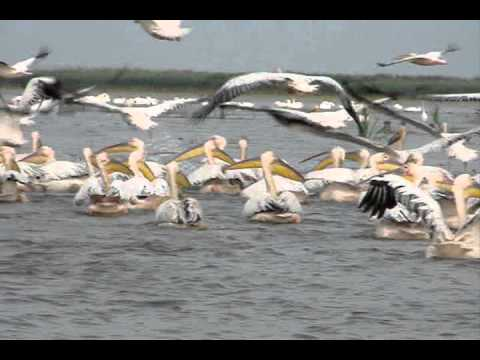 Danube Delta Romania Europe.wmv